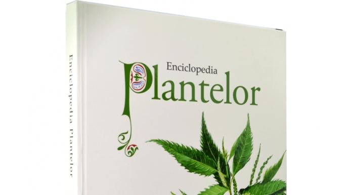 dacia-plant-enciclopedia-plantelor-46893