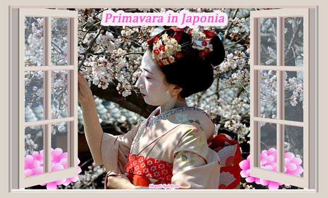 Cine ma Calauzeste Primavara in Japonia?
